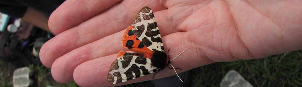 Scottish Wildlife Trust Lothians