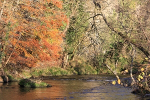 River Avon - Autumn